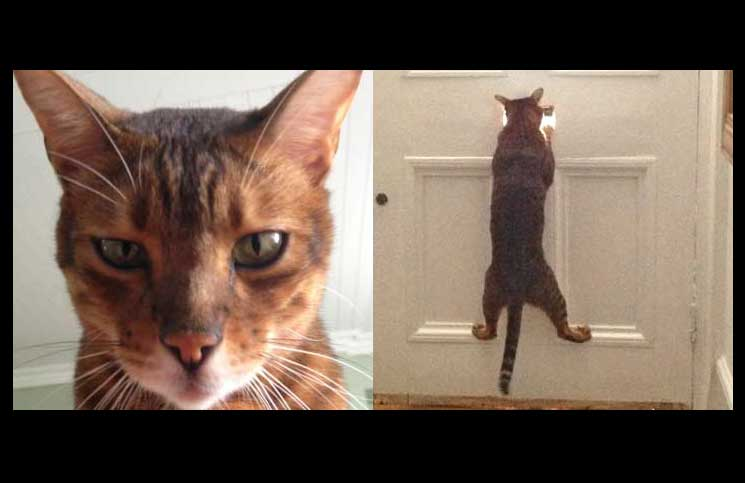 brackenbury-village-cat-burglar